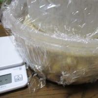 キクイモの味噌漬け作り・塩漬け