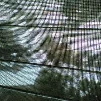 昨日、今日と雪が積もったね