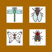 虫・昆虫2(ミニカット)
