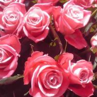 50本の薔薇の重量