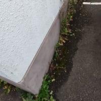 【草取り作業】エントランス〜駐車場周辺草取り作業中
