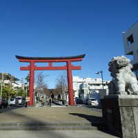 「鶴岡八幡宮」/鎌倉2019初冬