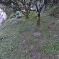 ゆず園草刈る