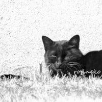 芝生に沈む猫
