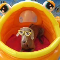 6/30(日)の【ALOHA塾】は、 未病ケアの《Dogscan》  犬のしつけ教室@アロハドギー