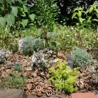 これからの季節に向けて植え替えとシャスターデージーの刈り取りと旅について