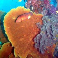 East of Eden - Similan #7, Andaman Sea, Thailand - イーストオブエデン、シミラン、タイ