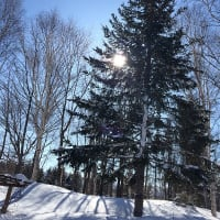 麓の家のスカイツリー 3月12日