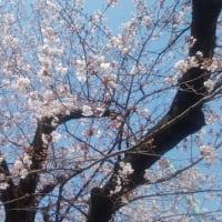 春爛漫で例年はウキウキしているはずなのに・・・