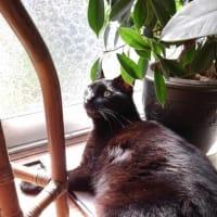 黒猫と花と観葉植物と