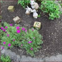 三歩進んで二歩さがる★正ちゃんに庭のお花を
