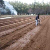 ●2/16 大久保農園報告 着々と畝づくり ジャガイモ植えは3月8日(日)と15日(日)