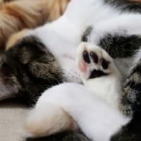 子猫のかわいい肉球を見て!