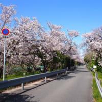 桜を見に行ってきました~♪