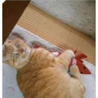 悦に入るモフ猫