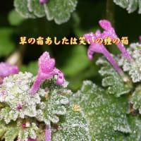フォト一行詩『 草の霜あしたは笑いの種の箱 』vyw0201