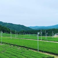 宇治田原の旅 茶畑