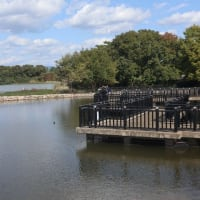 荒牧バラ園&昆陽池