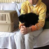 17年間私たちと過ごしたうちのネコ、ホレイシオにさようならを言った日