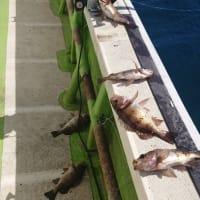 サビキ&カレイ釣り