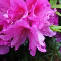 草花達には恵みの雨