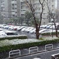 三月も終わりなのに雪