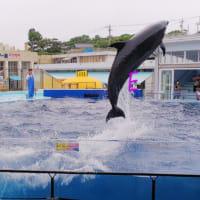 越前松島水族館に行って来ました ☆
