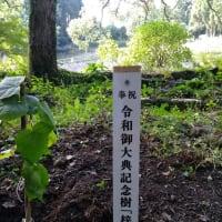 天皇陛下御即位記念樹【梓]