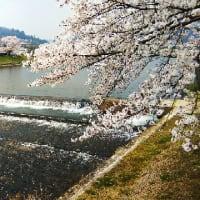 三刀屋の桜並木
