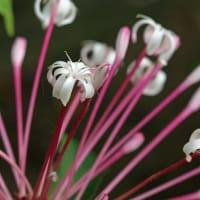 咲くやこの花館シリーズ 乾燥地植物室 他 (2月18日版 その3)