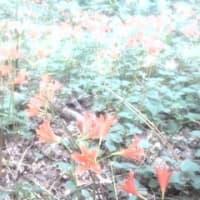 2021盛夏の花と日常
