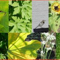夏の終わり菜園風景