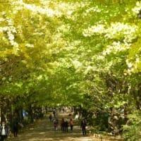 昭和記念公園(紅葉)