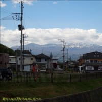 生いわしフライ - 福島市/あさひや食堂 -
