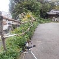 草刈り☆彡