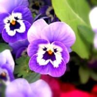 新型コロナウィルスの春