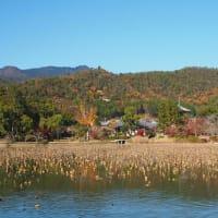 大覚寺大沢池の紅葉終盤