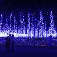 横浜とあしかがフラワーパークへ