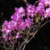 💖10日の里山の花②💖