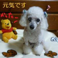 老犬ラスさんの血液検査  (*´∇`*)