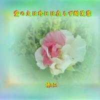 フォトTAO575『 愛の火は外には在らず酔芙蓉 』zwp0803