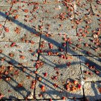 公園のヒメリンゴ