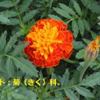 2019・09・20ひろし曽爺1840の花鳥風月> 🌺我が家の九月の花壇をご覧ください!