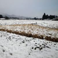 19-12-05 新雪5センチ