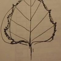 植物のかたちとエーテル観察講座~宇宙の思考に同調する