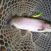 那須白河フォレストスプリングス 釣行
