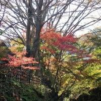 日本の里の紅葉など~「みかん狩りと紅葉でアート」番外編~