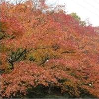 紅葉 ・ etc. (^^♪ (*^_^*)