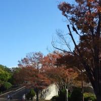秋の気配の相模原公園2019/11/14