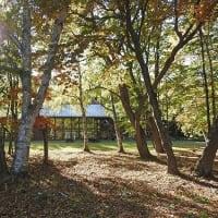 晩秋のもりのパレット Palette of late autumn forest